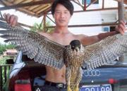 鸽子的致命杀手