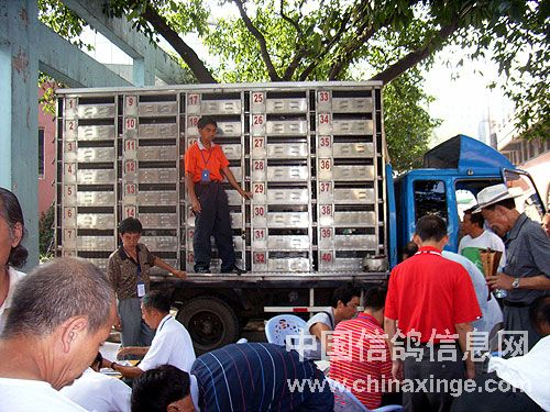 重庆市信鸽协会秋季特比环决赛上笼现场报道