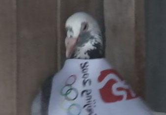 用鸽人的方式为中国奥运加油!