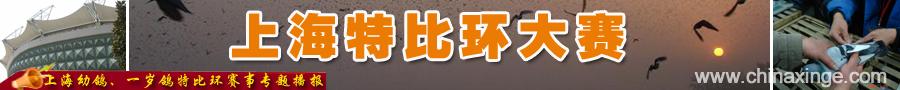 上海特比环大赛