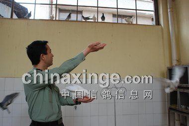 鸽史征稿:中国军鸽正走在世界前列(图)