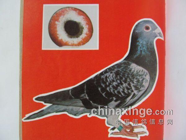 1985年上海超远程冠军风采(图)