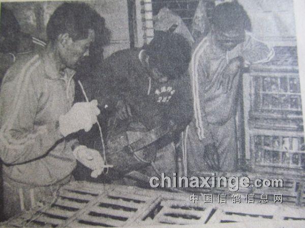 1987年上海2424公里超远程珍贵照片