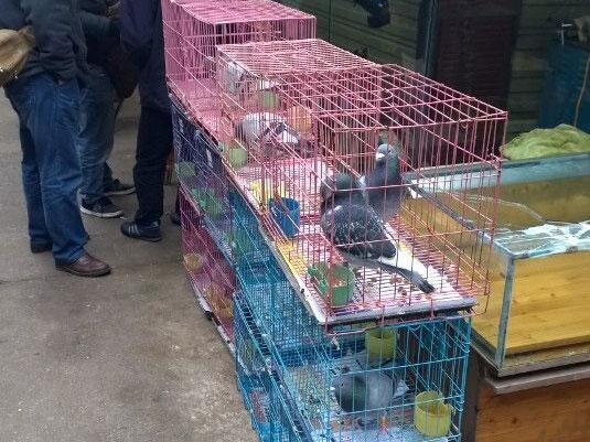 淘国血:逛贵阳油榨街花鸟市场