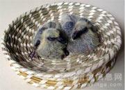 各类巢盆的优缺点(图)