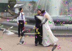 新颖的婚礼 翱翔的彩鸽