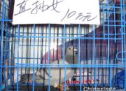 沈阳鸽展零下20℃揭幕 古稀鸽友到场(图)
