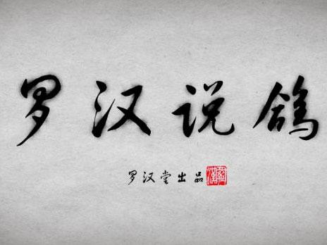 罗汉说鸽142期预告:北京鸽友曹士仿做客