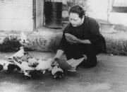 赞中正美龄鸽――云南战鸽轶事(十五)