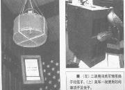 鸽神回归加州――云南战鸽轶事(十七)