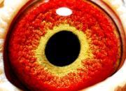 鸽眼杂感:鸽眼研究走进了死胡同