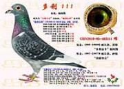 内蒙鼎华阁:重金引进实战种鸽