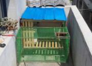 欢迎吐槽:阳台迷你鸽笼(图)
