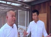 罗汉说鸽第146期视频:专访北京长江鸽业