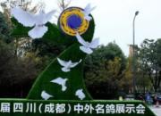 约起来!成都、杭州鸽展今天开幕