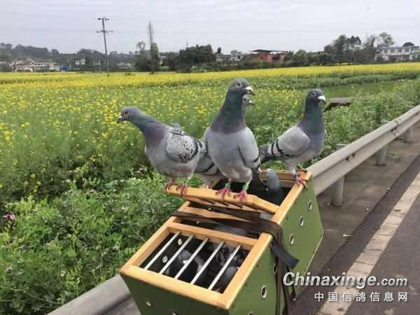 路训10公里 菜花丛中放飞