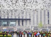 北京全市联翔各区成绩出炉 冠军验鸽报道