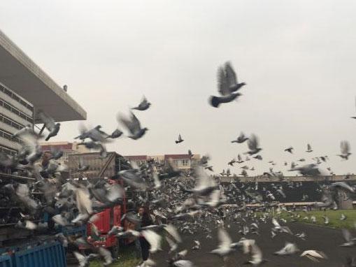 千公里重头戏:江苏上海两地三