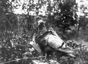 """一只荣获""""迪肯勋章""""的传奇军鸽"""