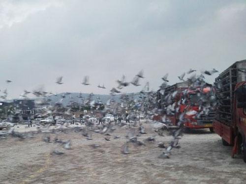 江苏超远程:扬州赛区百强榜出