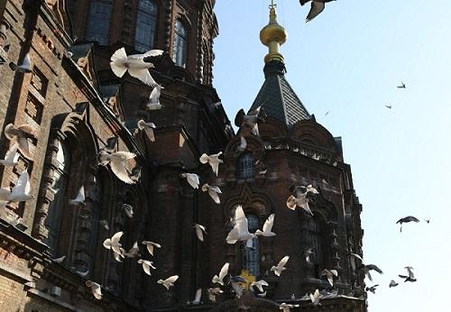 """巴西教堂为赶野鸽祭出""""催眠""""大招"""