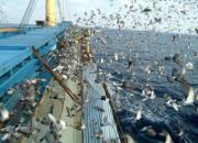 中国大陆、台湾赛鸽经营对比十问