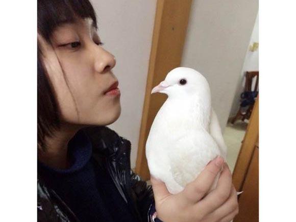 爱鸽小公主的白色宠物