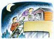 """老公四十多羽种鸽被盗 邻居也遭恶贼""""清棚"""""""