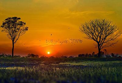 信鸽归巢率低是天灾还是人祸