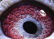 我的鲁巴鸽的故事:前期砂眼 后期黄眼