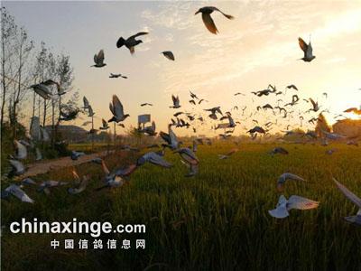 上海�义�国际寄养棚资格赛开战 归巢率已超98%