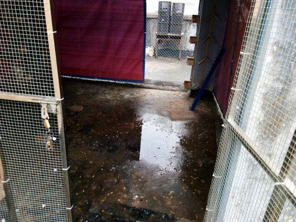 一到雨天鸽棚就湿了 求助