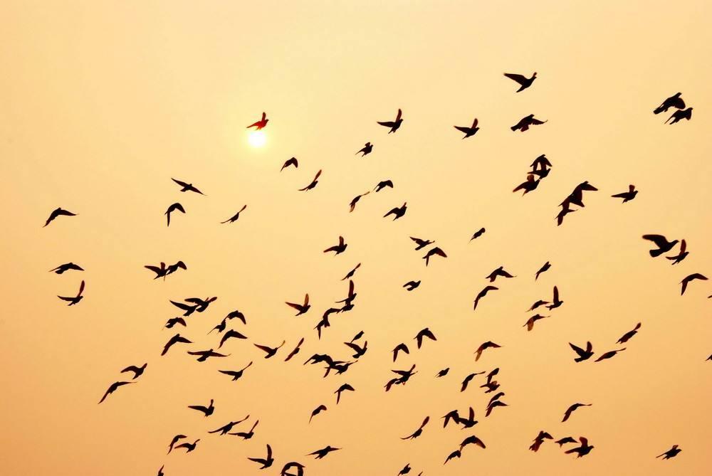培养小鸽子作为参赛选手的标准