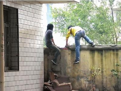 偷鸽贼翻墙盗窃 被堵院内当场抓获