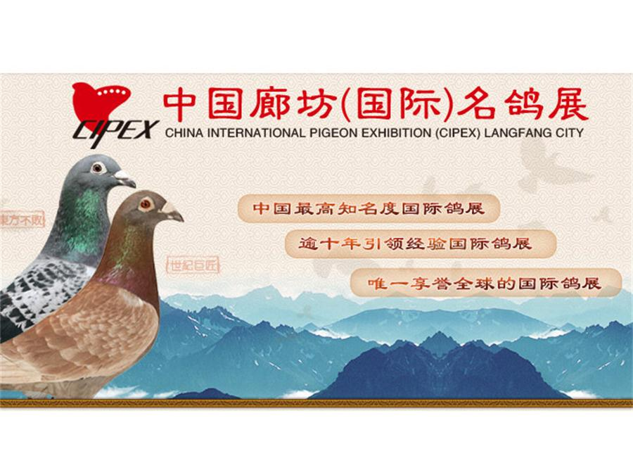 第八届廊坊春季名鸽展开幕在即