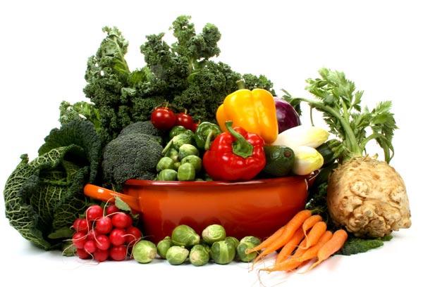 赛鸽食蔬菜有益无害