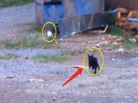 视频:猫咪会武术 谁也挡不住