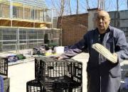视频:巧用塑料筐制作鸽舍巢箱