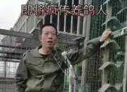 """金""""鸽""""铁马 啸傲江湖"""