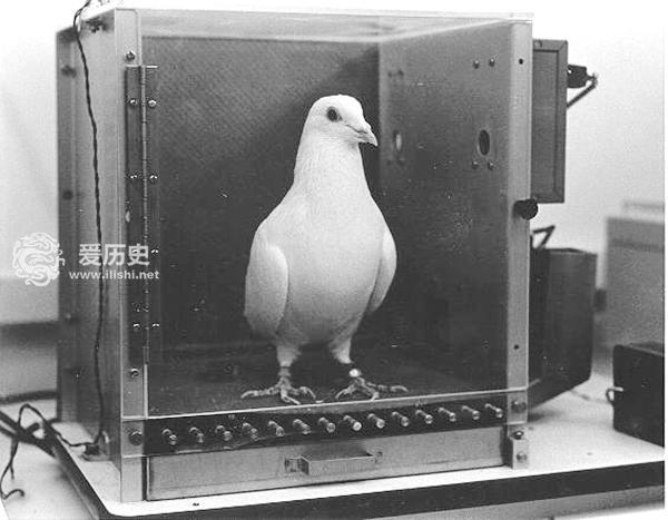 二战时美国研发火箭制导技术 鸽子是核心