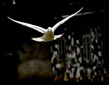 如何将你不稳定的鸽子稳定下来?