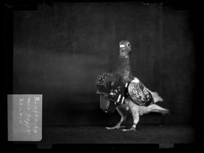 鸽子摄影师带你看百年前的地球