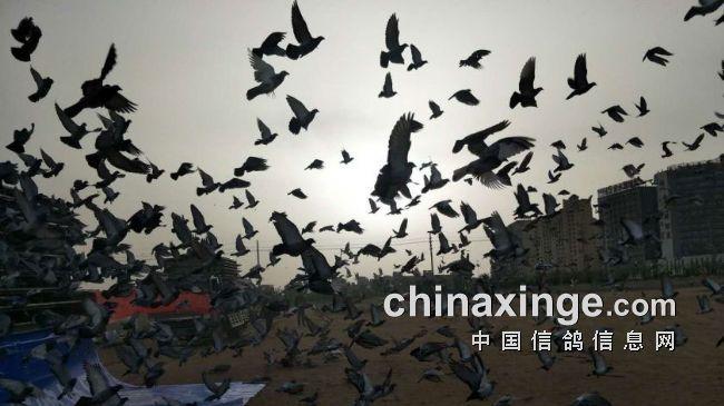 中国国家赛鄂尔多斯赛区圆满成功 参赛规模倍增