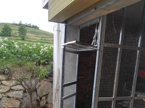 农村鸽舍改造:这个自动放飞门怎么样