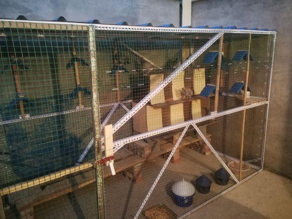 三日建死棚鸽舍 鸽友们有什么建议