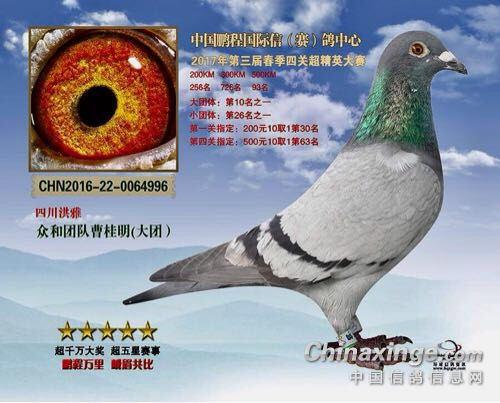 专访鹏程国际的常胜将军――曹桂明先生