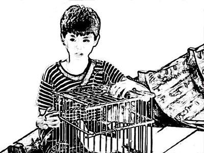 讲讲我和鸽子的故事:养鸽发不了财 这只是爱好