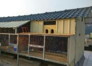 工薪小棚重新设计装修起棚  楼顶养鸽美美哒