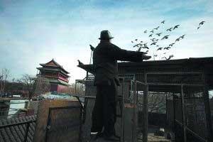 敢问:城市养鸽 路在何方?