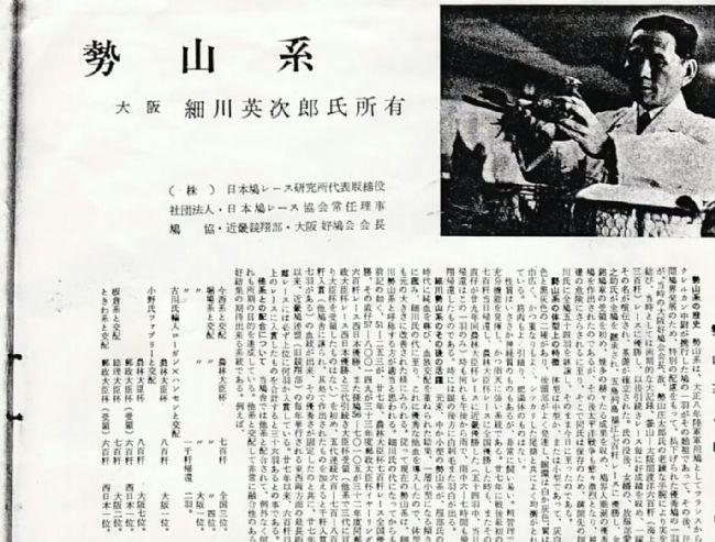 外血名系之日本势山鸽系欣赏